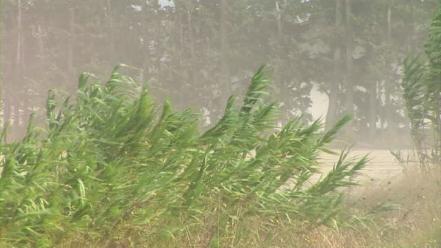 vidéos et rushes de hd : vent fort - tempête de poussière