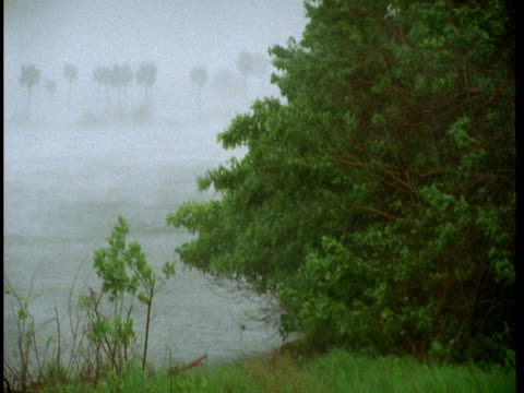 Strong winds and rain pelt trees and shrubs along a lush coastline.