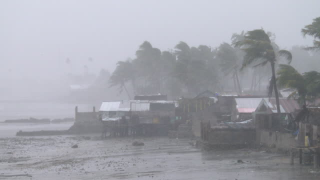 strong winds and torrential rain as typhoon hagupit makes landfall over samar island philippines on 6th december 2014 - gale stock videos and b-roll footage