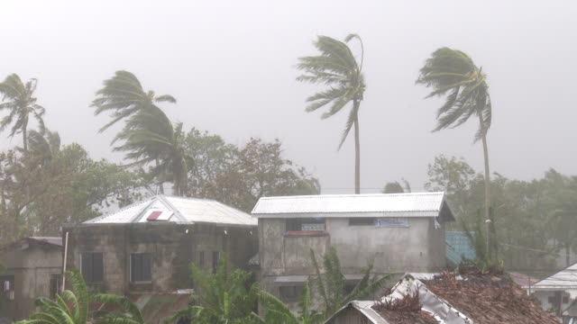 Strong winds and torrential rain as typhoon Hagupit makes landfall over Samar island Philippines on 6th December 2014