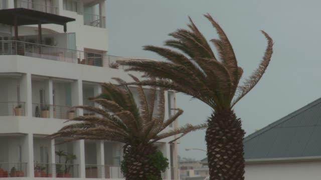 strong winds blow against the palm trees at sea point beach. available in hd. - 2013 stock videos and b-roll footage