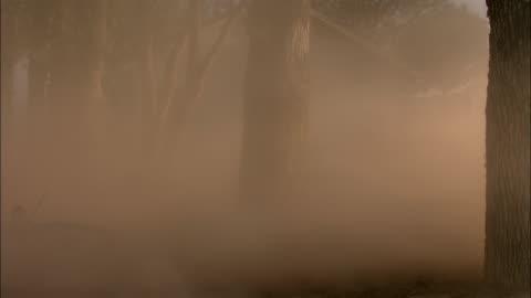 strong winds blow clouds of dust through trees, hurtling debris. - dammstorm storm bildbanksvideor och videomaterial från bakom kulisserna