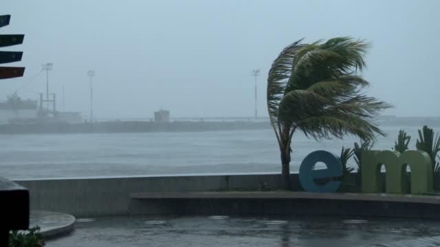 strong winds blow palm tree as powerful typhoon ramassun nears legaspi city on 15th july 2014 - ルソン島点の映像素材/bロール