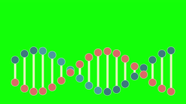 4k dna structure - green screen - loopable stock video - chromosome stock videos & royalty-free footage
