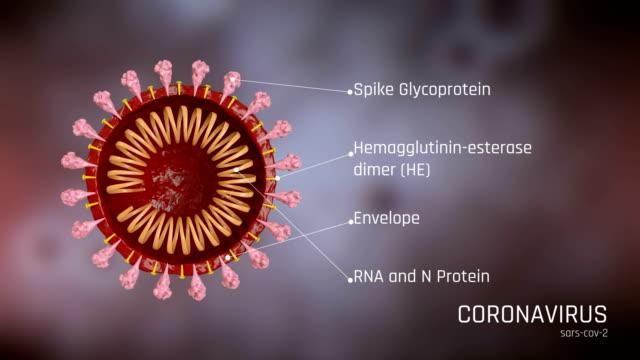 冠狀病毒結構,covid-19 - 分子 個影片檔及 b 捲影像