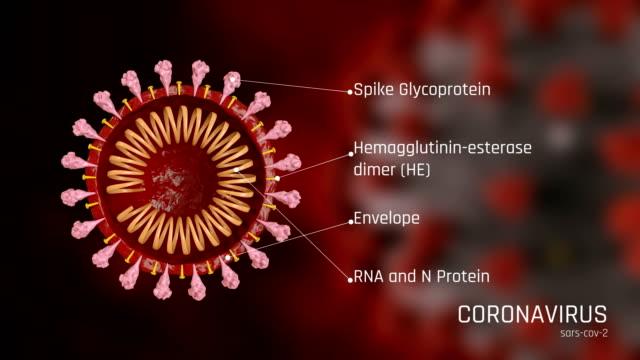 vídeos de stock e filmes b-roll de structure of coronavirus, covid-19 - mutação genética