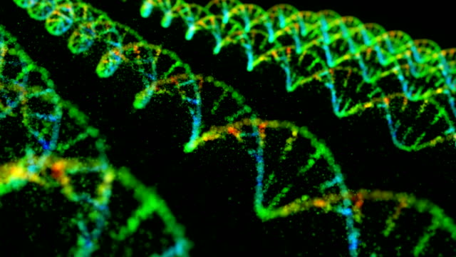 dna structure - animazione biomedica video stock e b–roll