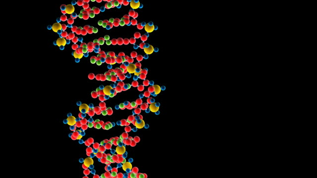dna structure - helix model stock videos and b-roll footage