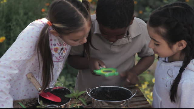 cu students examining pots of soil with magnifying glass / los angeles, california, united states - breitwandformat stock-videos und b-roll-filmmaterial