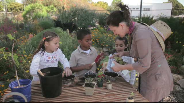 stockvideo's en b-roll-footage met ms students gardening with teacher / los angeles, california, united states - breedbeeldformaat