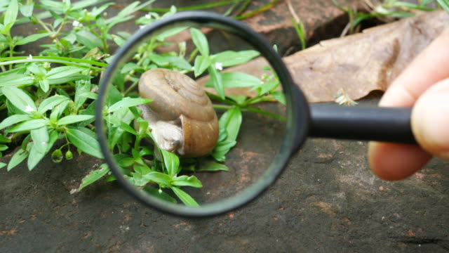 student's hand use magnifying glass see a snail on leaf