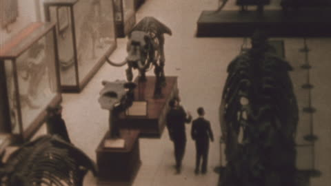 students looking at dinosaur and mastodon exhibits in the smithsonian / washington, d.c., united states - smithsonian institution stock videos & royalty-free footage