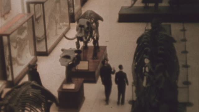 students looking at dinosaur and mastodon exhibits in the smithsonian / washington dc united states - smithsonian institution stock videos & royalty-free footage