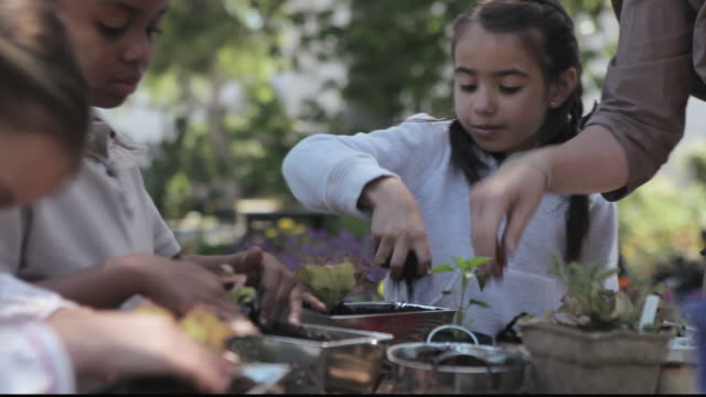 stockvideo's en b-roll-footage met cu students planting seedlings in pots with teacher / los angeles, california, united states - breedbeeldformaat