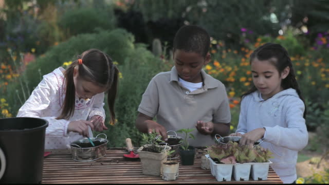 vidéos et rushes de ms students planting seeds in pots / los angeles, california, united states - jardiner