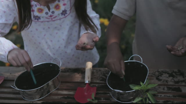 cu students planting seeds in pots / los angeles, california, united states - breitwandformat stock-videos und b-roll-filmmaterial