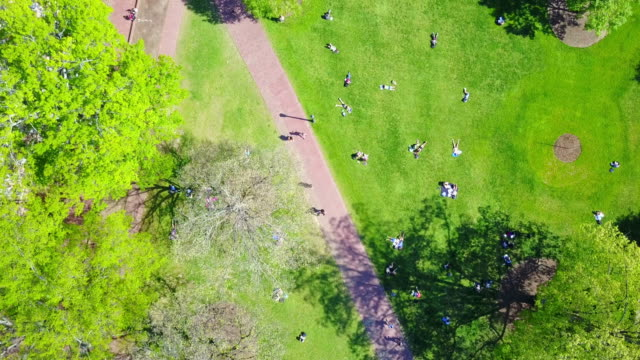 students studying on grass at unc - public park stock videos & royalty-free footage
