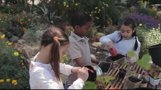 vídeos de stock, filmes e b-roll de ms students transplanting potted plants with teacher / los angeles, california, united states - formato letterbox