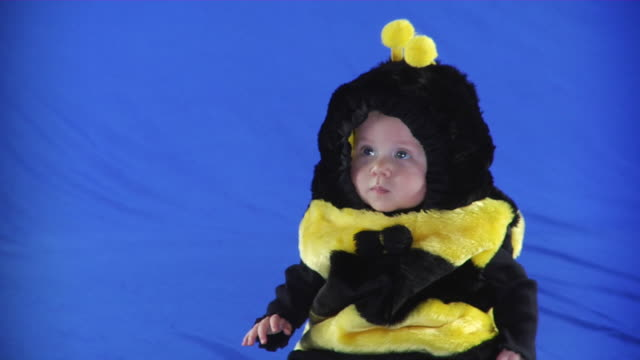 ms pan studio shot of baby girl (6-11 months) in bee costume on blue screen - 6 11 monate stock-videos und b-roll-filmmaterial