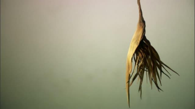 CU, Studio shot of dried plant, California, USA