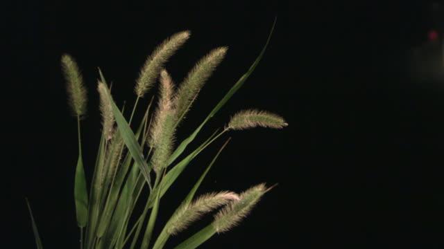 slo mo, cu, studio shot of water drops falling on blade of grass - blade of grass点の映像素材/bロール