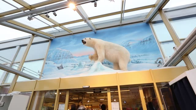 stuffed polar bear on display outside a shop in longyearbyen on svalbard. - animal hair stock videos & royalty-free footage