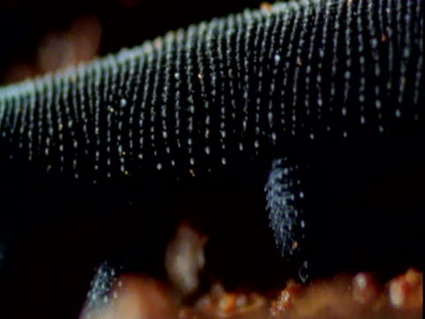 Stumpy legs of velvet worm as it walks past, New South Wales