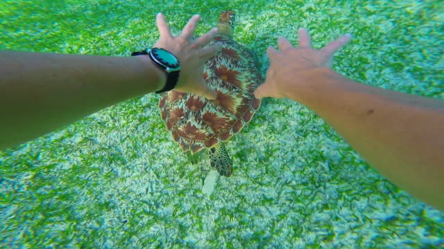 Stunning footage of a nice turtle swimming underwater in the paradise Gili islands with clear waters recorded from personal perspective swimming behind the turtle during travel vacations in Indonesia.