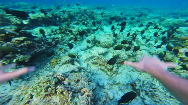 Stunning footage of group of fishes in underwater view in the paradise Gili islands with clear waters recorded from personal perspective swimming behind the fishes during travel vacations in Indonesia.