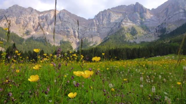 stockvideo's en b-roll-footage met stunning pyrenees mountains in summer with mountain ridge and blooming meadow. los pirineos en verano con campos florecidos. - rotsmuur