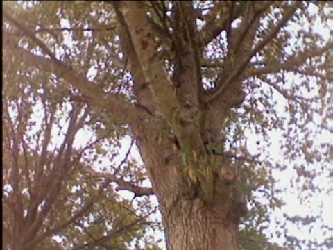 / stunt woman rachel star wearing batsuit and talking to camera / woman attempts to use grappling hook to climb tree, swings from grappling hook but... - ヒーロー点の映像素材/bロール