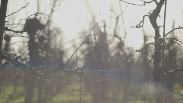 stylised, washed-out close-up pan across bare apple trees in an orchard with 'rainbow' lens flare effect, uk. - albero da frutto video stock e b–roll