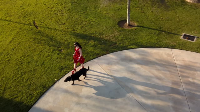 stylish woman walking dog in park- aerial drone shot - lawn stock videos & royalty-free footage
