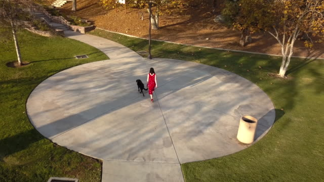 stylish woman walking dog in park- aerial drone shot - curve stock videos & royalty-free footage