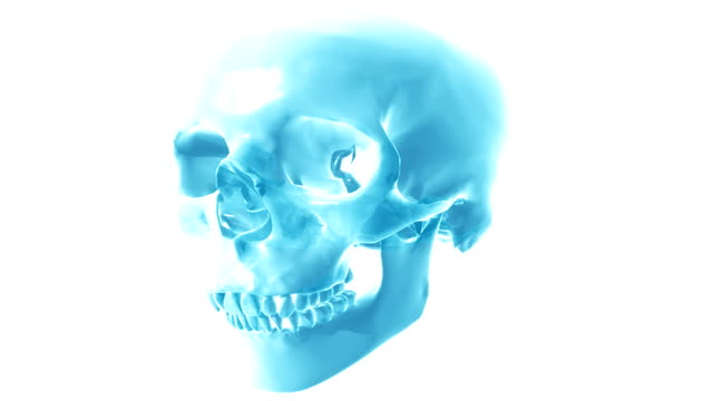 a stylized human skull which rotates from an anterior to a lateral view. the jaw opens and closes in a biting motion. - biomedical illustration stock videos & royalty-free footage