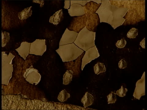 suareka : cms damage in cafe where berisha family was slaughtered fade to - slobodan milosevic stock-videos und b-roll-filmmaterial
