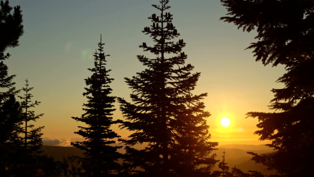stockvideo's en b-roll-footage met subalpine fir tree forest and sunrise mist clouds mt. hood - pacific crest trail