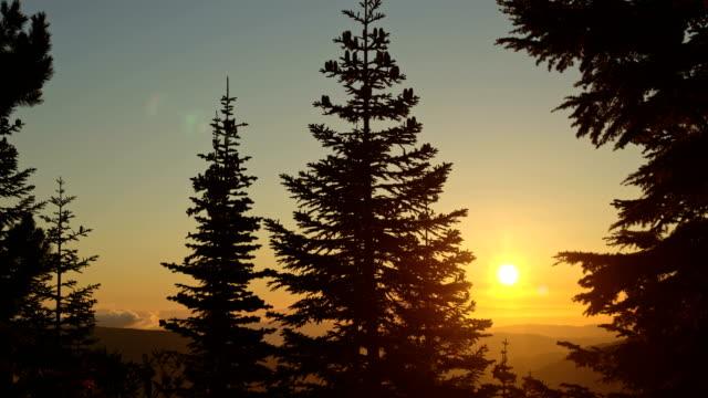 Subalpine fir tree forest and sunrise mist clouds Mt. Hood