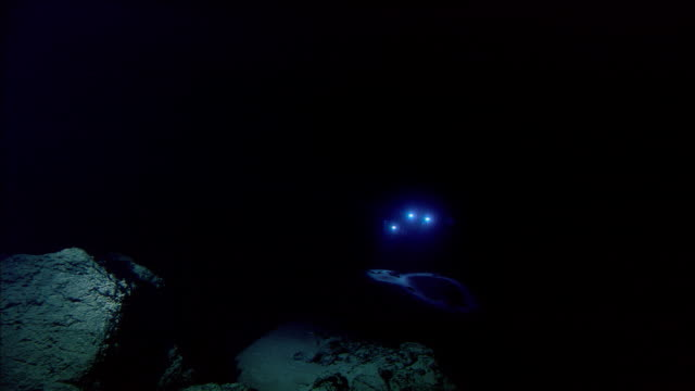 Submersible shines lights onto deep sea floor, Mid Atlantic Ridge