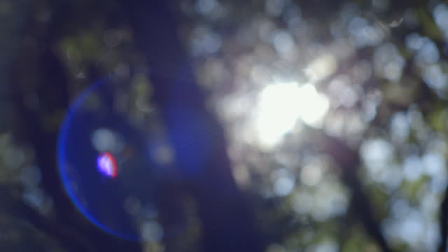 Subtle lens flare is created as the camera pans right over a defocussed tree canopy in New South Wales, Australia.