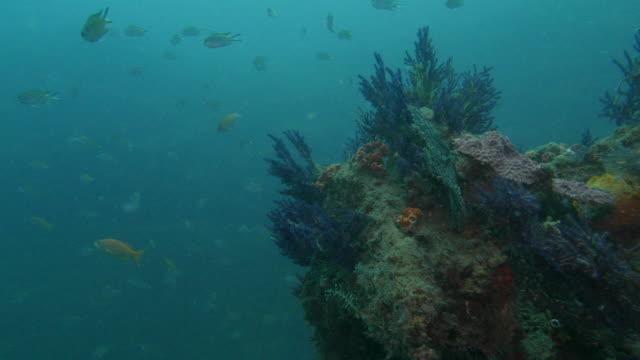 vídeos de stock e filmes b-roll de sub-tropical sea coral reef - coral macio