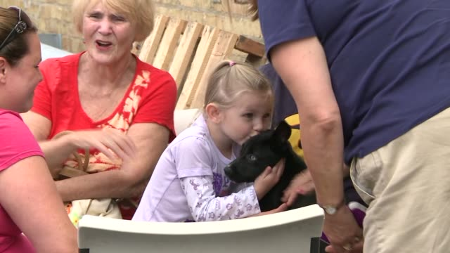 WGN A suburban animal shelter held an adoption event after a bus crashed into the structure causing it to be unsafe Little Girl Kissing Puppy At...