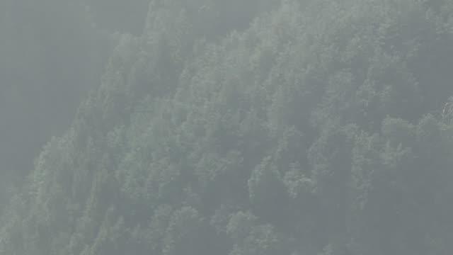 aerial, a suburban area of tokyo - ヒマラヤスギ点の映像素材/bロール