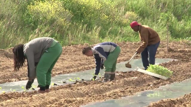 a successful vegetable garden initiative in portugals prisons is helping to supplement the countrys food banks - leiria district stock videos & royalty-free footage