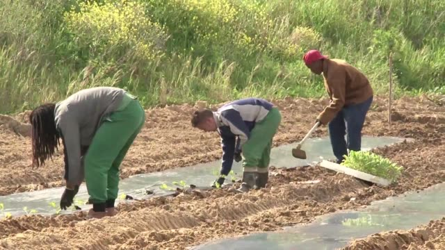 A successful vegetable garden initiative in Portugals prisons is helping to supplement the countrys food banks