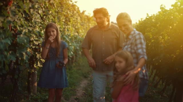 vídeos y material grabado en eventos de stock de exitoso negocio vitivinícola. - viña