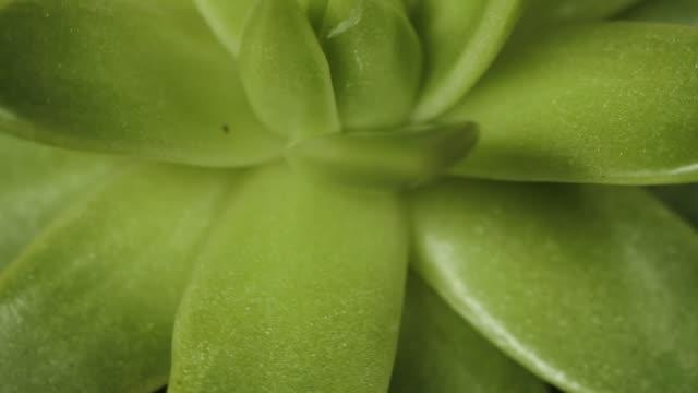 stockvideo's en b-roll-footage met sappige plant - kamerplant
