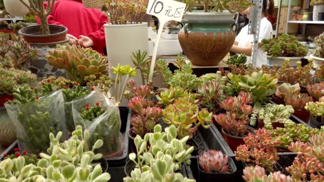 stockvideo's en b-roll-footage met succulent plants - kamerplant