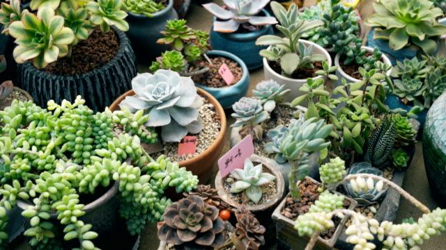 succulent plants - succulent plant stock videos & royalty-free footage