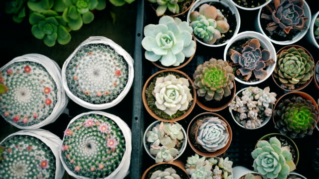 succulent plants - cactus video stock e b–roll